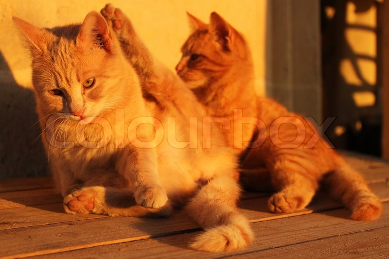 two small cats playing with each other stock photo colourbox. Black Bedroom Furniture Sets. Home Design Ideas