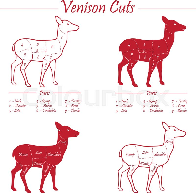 Fantastic Venison Meat Cut Diagram Scheme Stock Vector Colourbox Wiring Digital Resources Hetepmognl