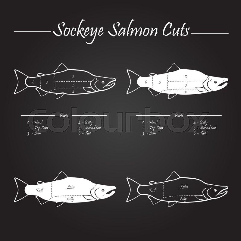 Sockeye Pacific salmon cutting diagram illustration, white on ...