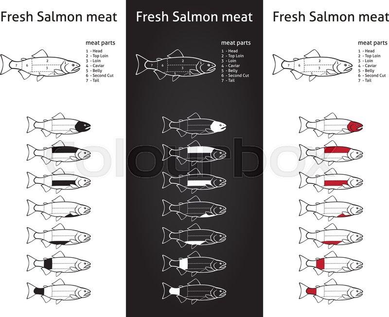 Fresk salmon meat diagram | Stock Vector | Colourbox