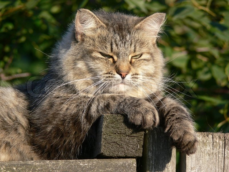 Stock image of 'Cat lying on the fence under warm sun'