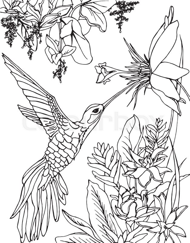 Hummingbird And Flowers Stylized Bird Drinking Nectar From FlowerZentangle Doodle Line Art Coloring Book Page For Adult