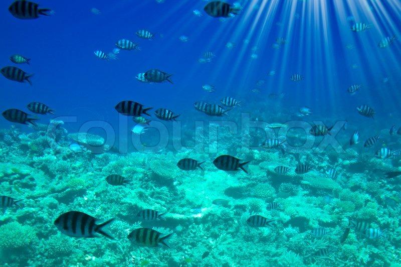 Underwater Landscape Of Red Sea Stock Photo Colourbox