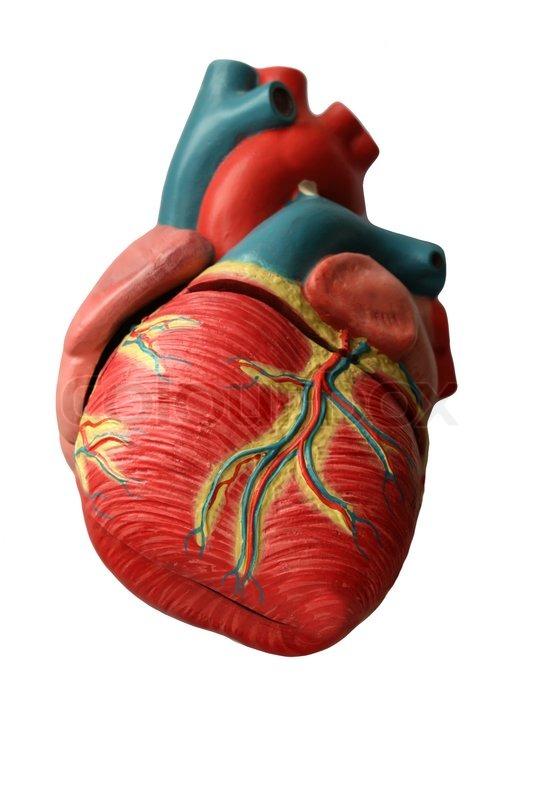 Herz, Mensch , Medizin, Arterien, Venen -, Gesundheits- , Muskel ...
