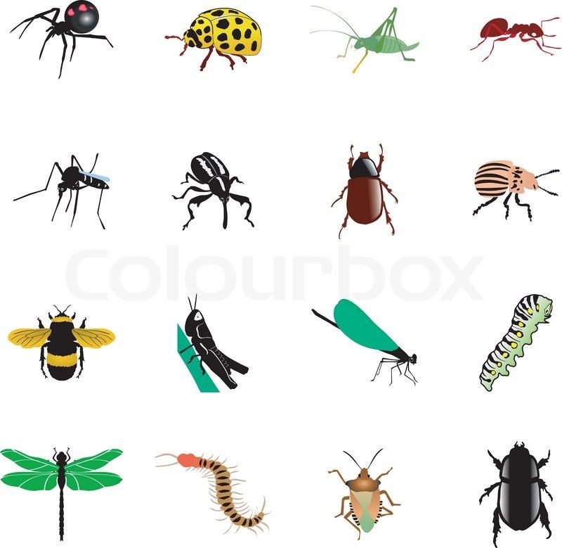 insekter ved stranden
