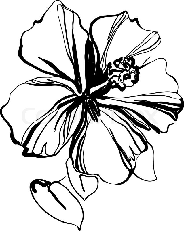 Hibiscus black and white sketch drawing a houseplant stock vector hibiscus black and white sketch drawing a houseplant stock vector colourbox mightylinksfo