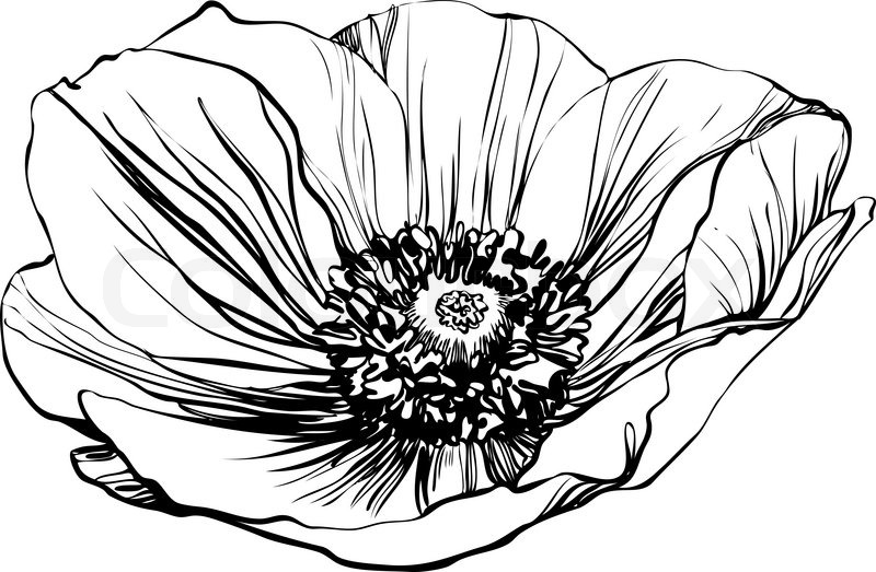 A black and white picture poppy flower stock vector colourbox a black and white picture poppy flower vector mightylinksfo