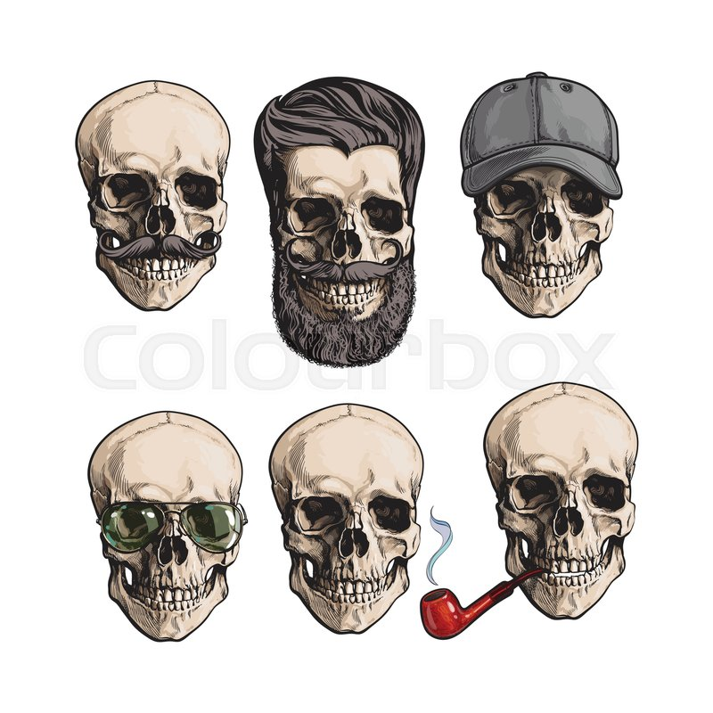 42fb3841d35 Set of human skull bones with ...