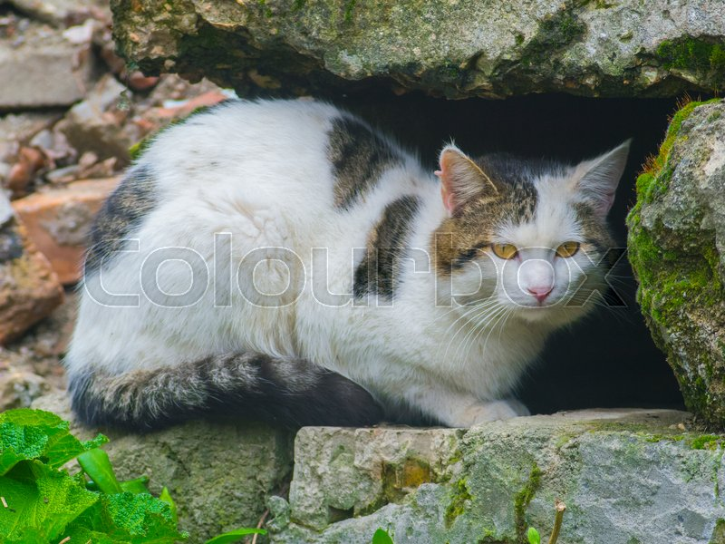 The cunning cat hides among the stones, stock photo