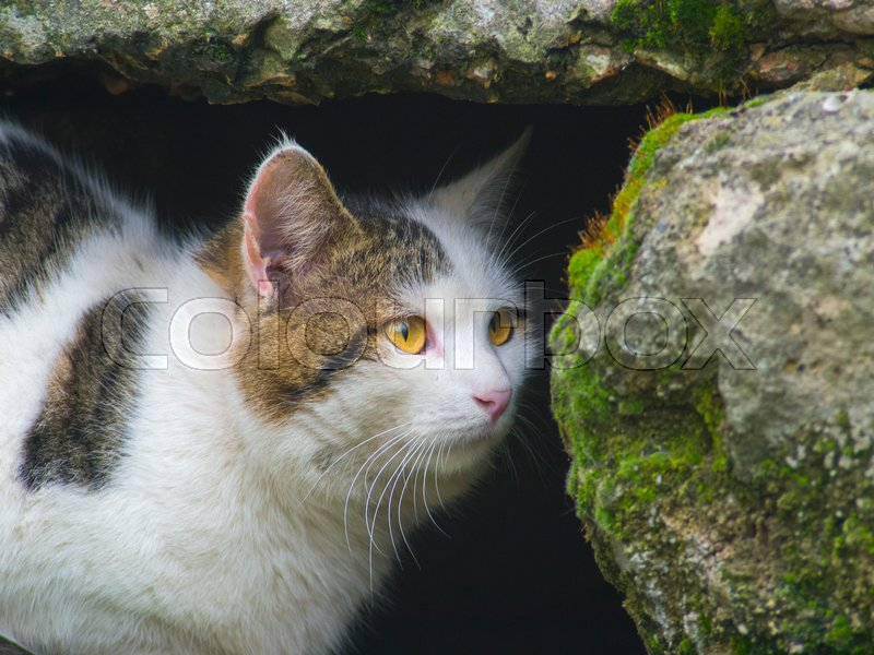 A cunning cat hides among the stones close up, stock photo