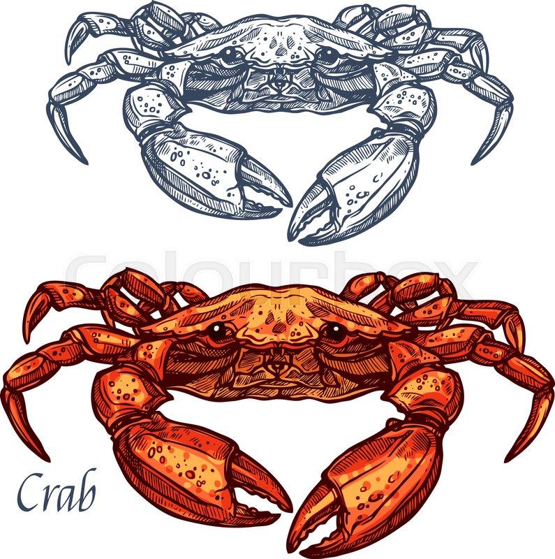 Crab Sketch Vector Icon Isolated Ocean Lobster Crustaceans Species