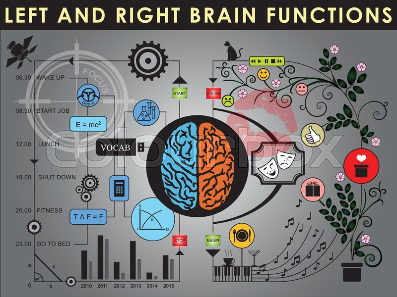 Left and right brain functions,     | Stock vector | Colourbox