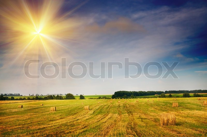 Beautiful Stubble Field With Hay Bales Stock Image