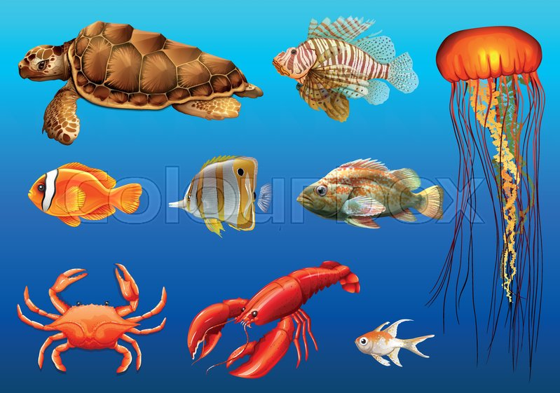 Different kinds of wild animals underwater illustration, vector