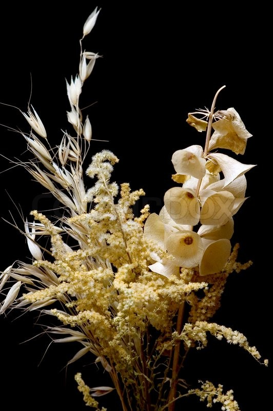 Bouquet of dry flowers on a black background | Stock Photo | Colourbox