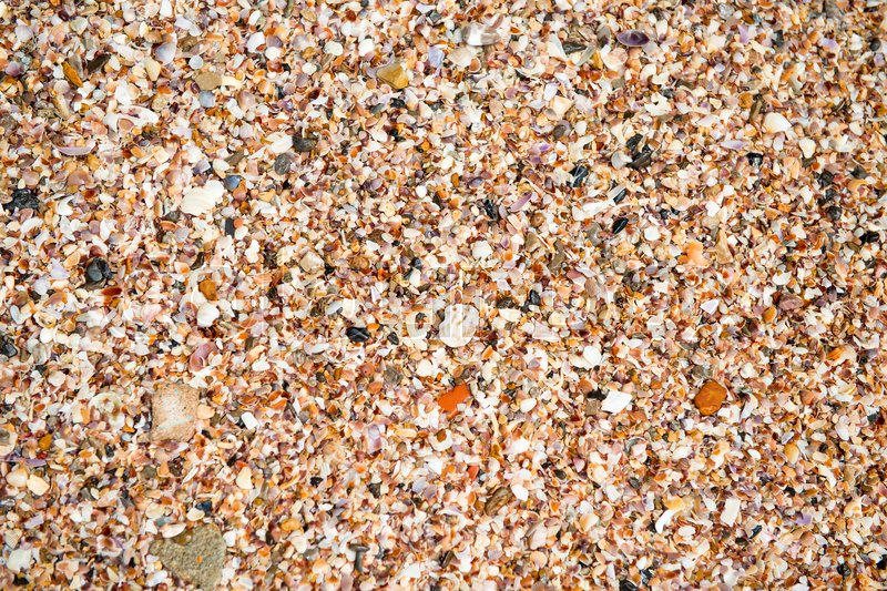 Crushed cockleshells on the beach close-up background, stock photo