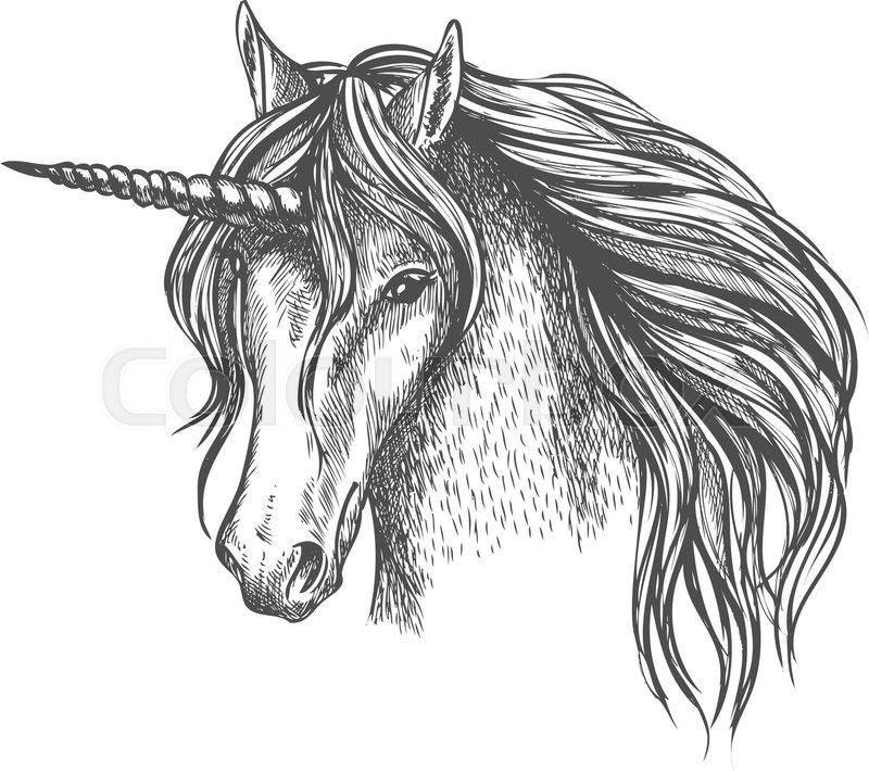 unicorn head sketch  mythic fantasy