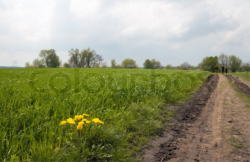 Yellow flower on border field near dirty road and peoples on road, stock photo
