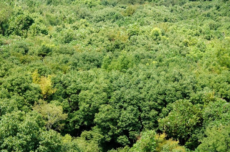 & Forest canopy as seen from above | Stock Photo | Colourbox