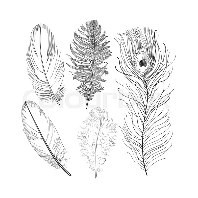 Hand drawn set of various black and white bird feathers, sketch ...