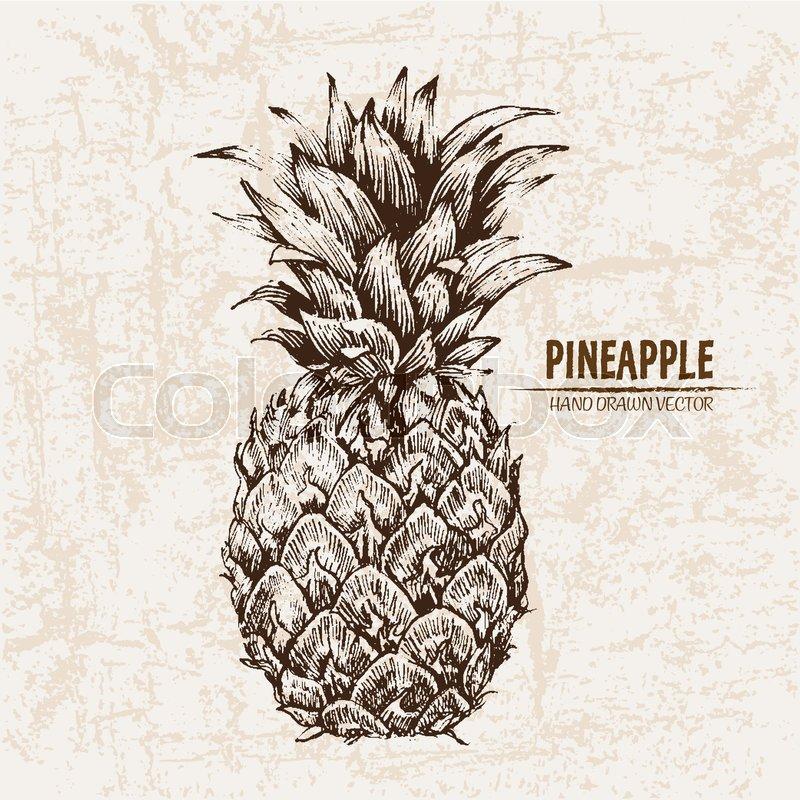 Digital vector detailed line art pineapple fruit hand drawn retro ...