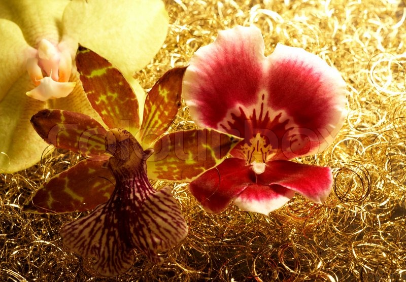 Stock image of 'Orchid flowers in decorative golden back'