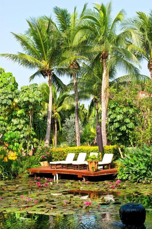 teich mit seerosen blumen und palmen luxus resort in. Black Bedroom Furniture Sets. Home Design Ideas
