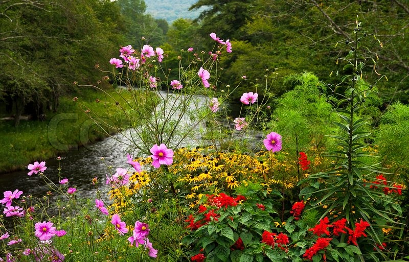 Bright Flower Bed In Mountains Near To The Proceeding