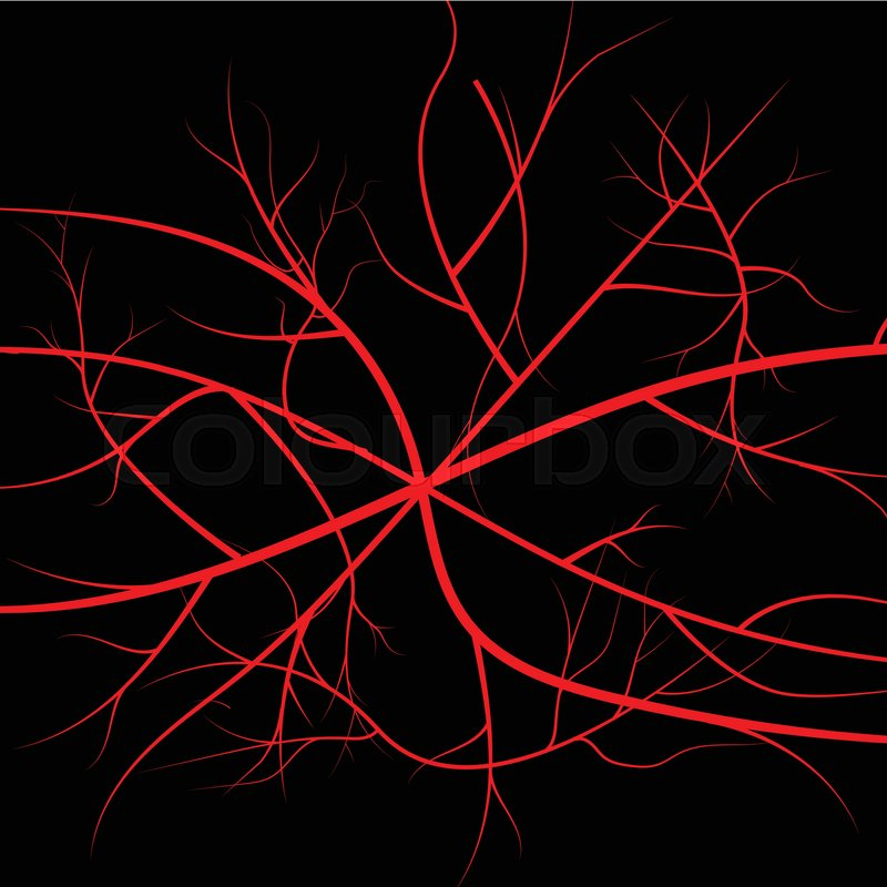 Human Blood Veins Red Vessels On Black Background Stock Vector