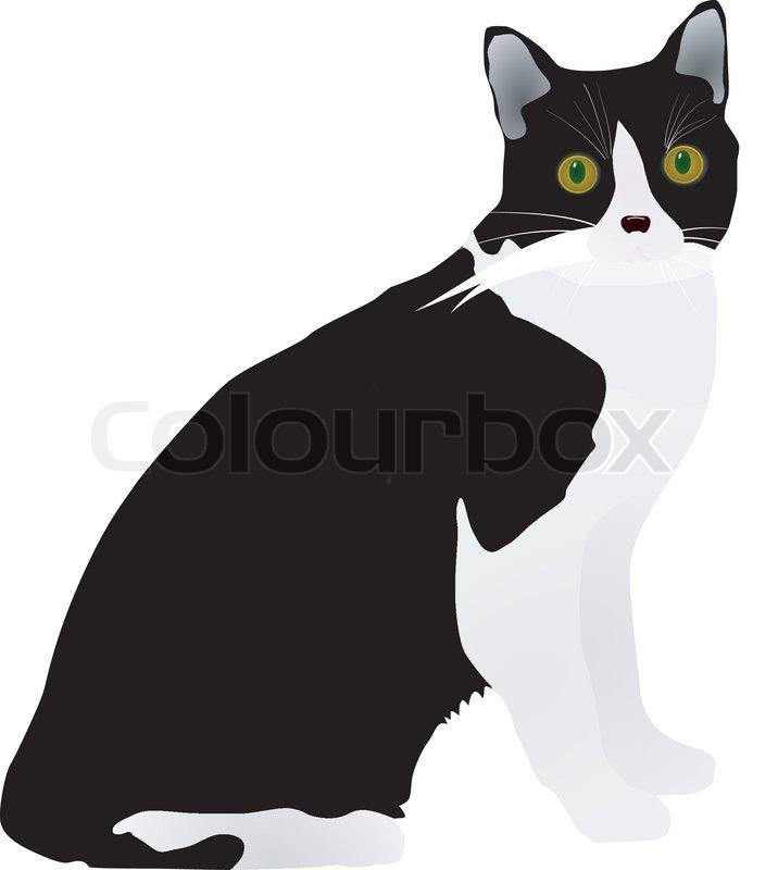 One Line Text Art Cat : Vector black cat stock colourbox
