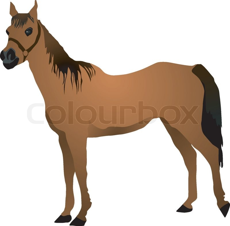 Vector Image Of A Horse Vector 2642962 besides Amber Rose further Boites De 50 Munitions 17 Hmr Winchester fr 4 CS17HMR1 together with Showthread likewise 111079179738. on savage model 3