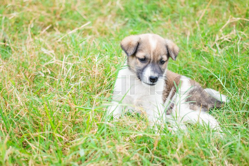 Baby dog play in lawn happy in morning, stock photo