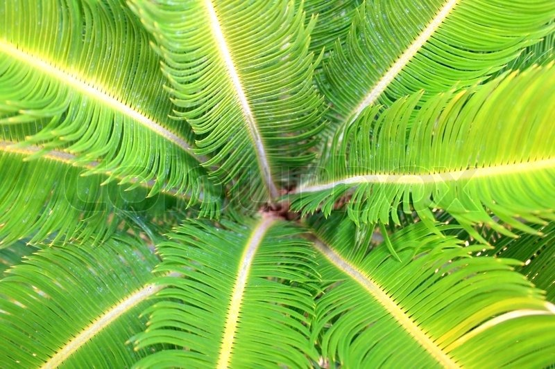 Palm leaves as a nice background, stock photo