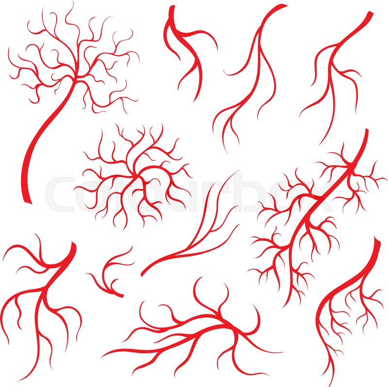Human Eye Veins Or Vessel Red Capillaries Blood Arteries Isolated