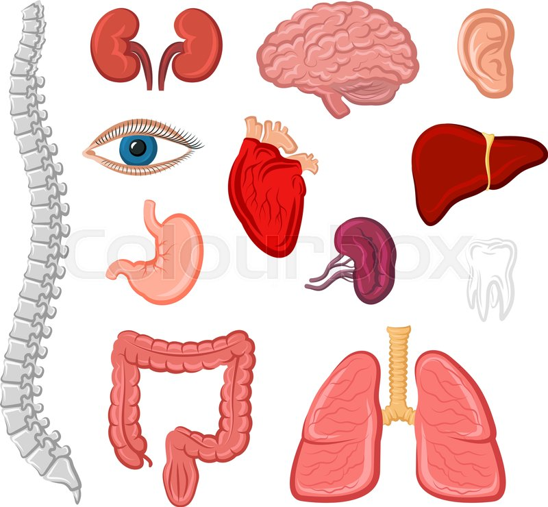 Human organ cartoon icon set. Heart, lung, liver, ear, stomach ...