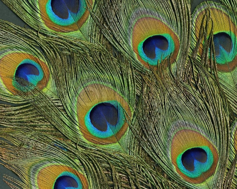 Full frame abstract background with some colorful peacock ...