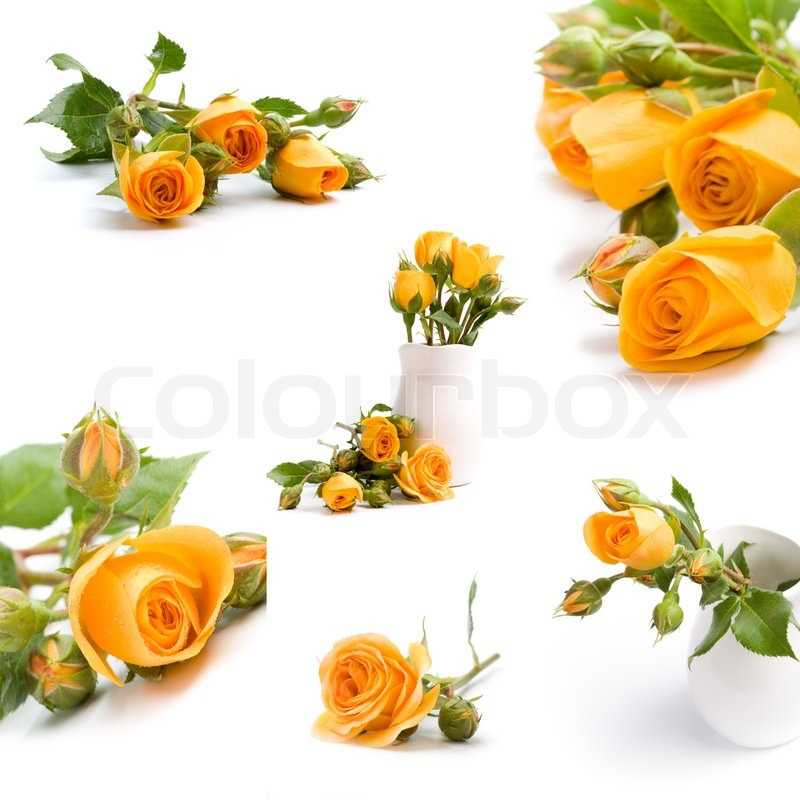 Yellow flowers bouquet on white background - collection | Stock ...