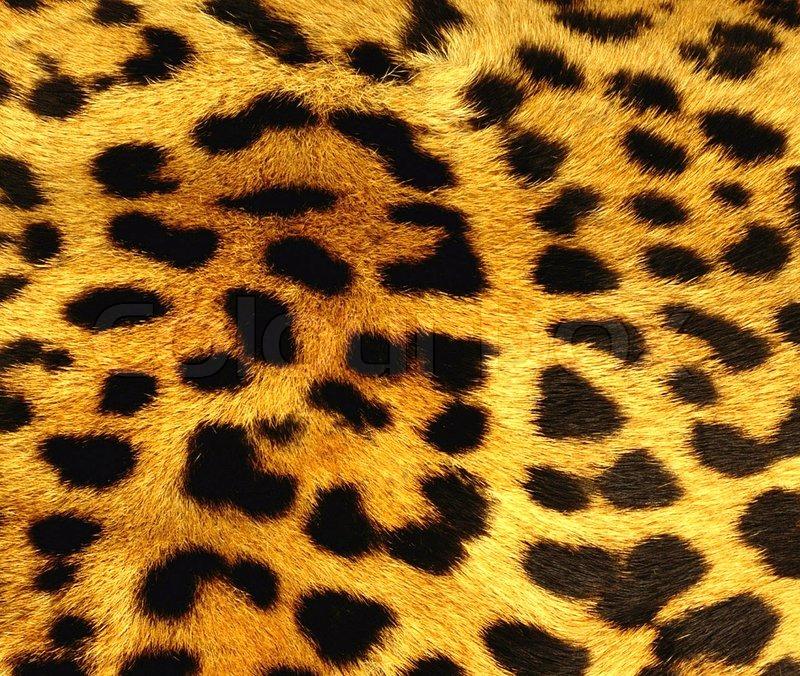 Lion skin texture galleryhip com the hippest galleries