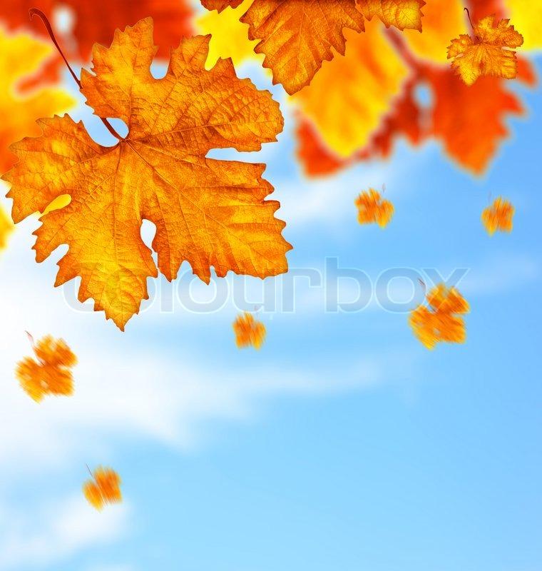 autumn fall tree backgrounds - photo #48