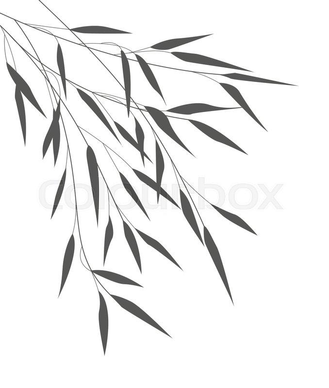 Bambus Frische Kultur Stock Vektor Colourbox