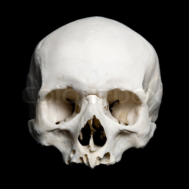 Upper half of the real human Skull | Stock Photo | Colourbox