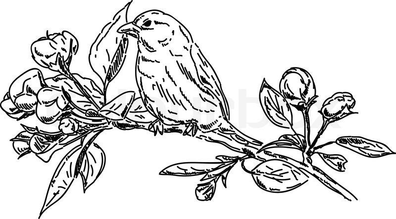 vector  frühling  vogel auf zweig  vektorgrafik  colourbox