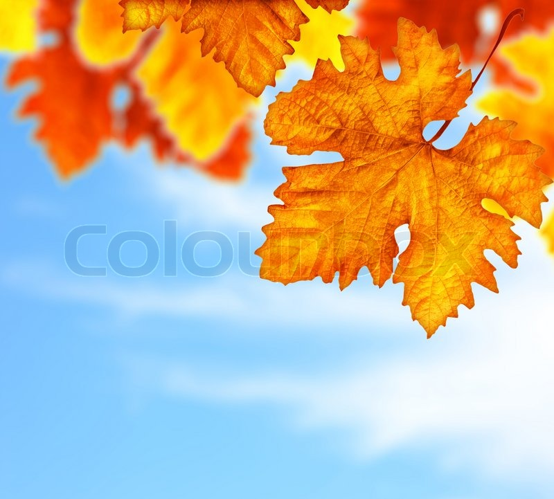 autumn fall tree backgrounds - photo #47