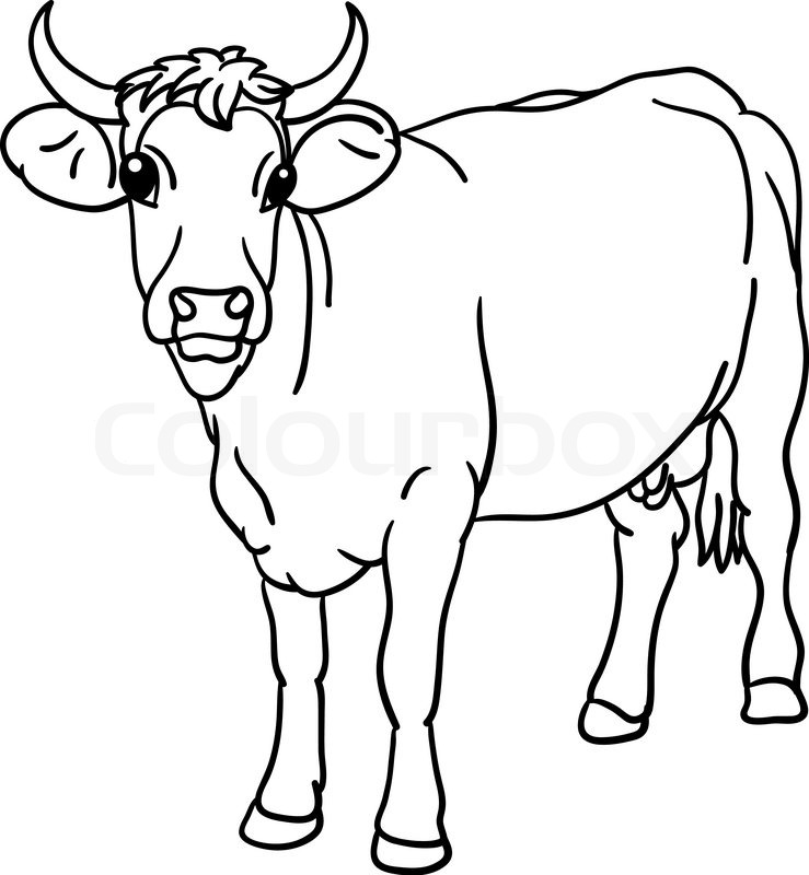 Vector - Kuh stand , die Ansicht von vorne   Vektorgrafik   Colourbox