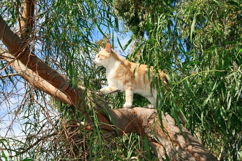 Flora Warrior Cats