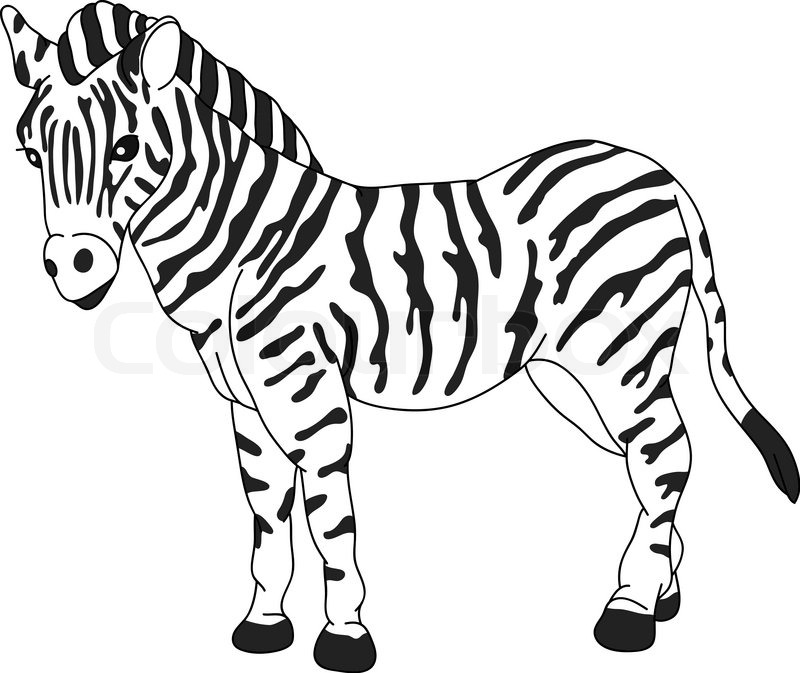 Line Drawing Zebra : Vector zebra standing isolated on background stock