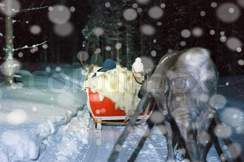 People in reindeer sledding at night safari in the forest of Rovaniemi, Lapland, Finland. Toned, stock photo