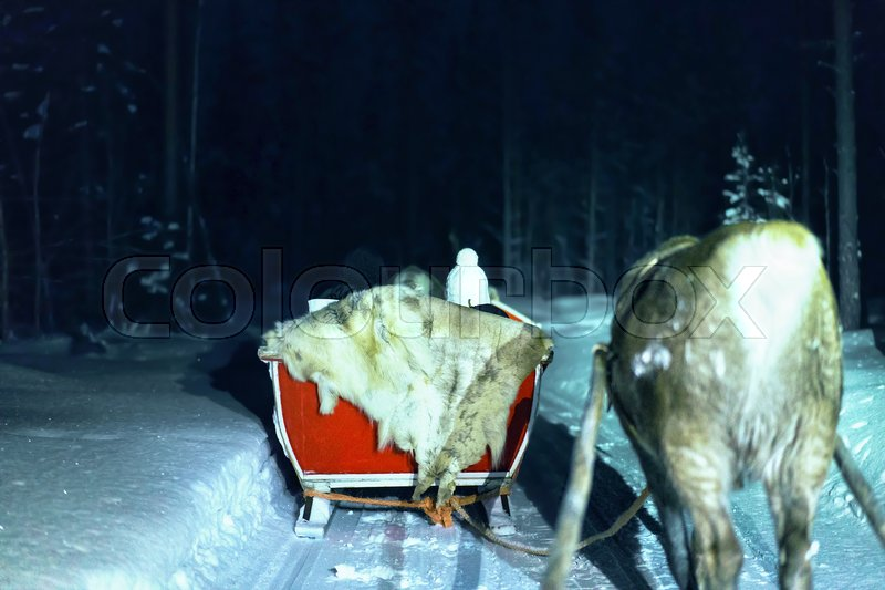People in reindeer sled at night safari in the forest of Rovaniemi, Lapland, Finland. Toned, stock photo