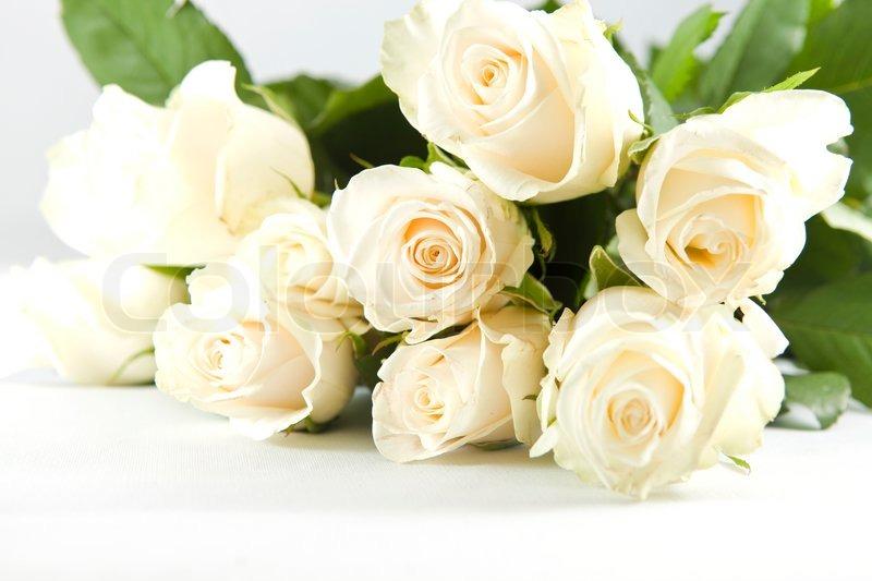 Schöne Haufen weiße Rose auf weißem Hintergrund | Stock ...