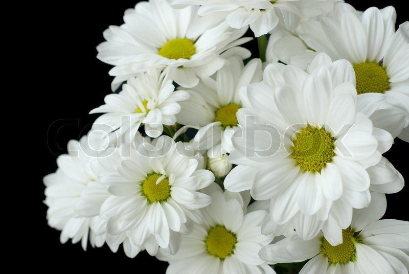 Bouquet Of White Flowers On A Black Stock Photo Colourbox